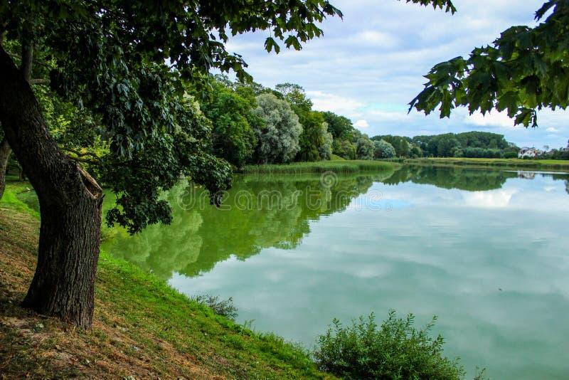 在湖,反射在湖,夏天风景的树 免版税库存图片
