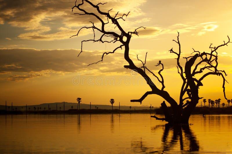 在湖manze的日落在非洲-国家公园selous比赛储备在坦桑尼亚 免版税图库摄影