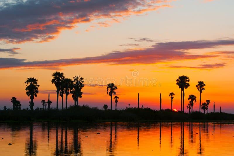在湖manze的日落在非洲-国家公园selous比赛储备在坦桑尼亚 库存图片