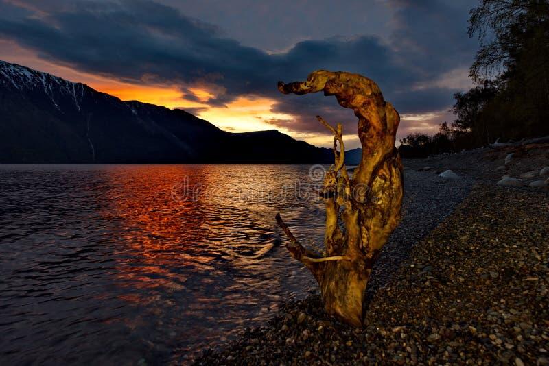 在湖Teletskoye岸的晚春  库存图片