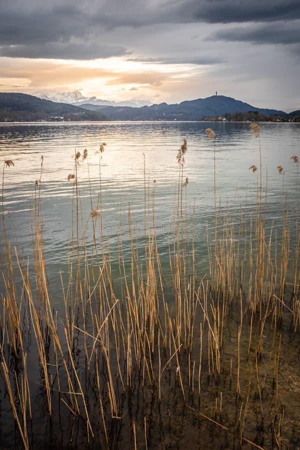 在湖Wörthersee的日落有一些芦苇和山的Pyramidenkogel 免版税图库摄影