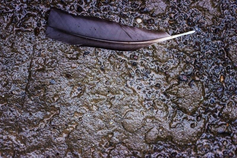 在湿地面的羽毛 图库摄影