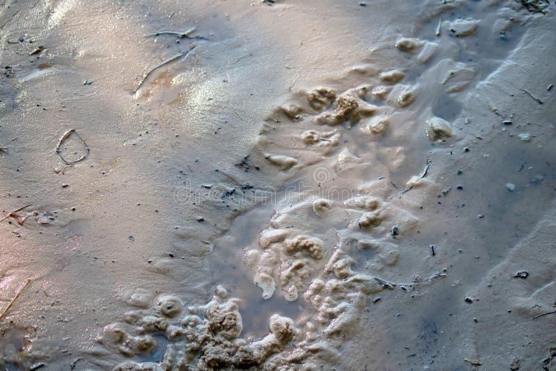 在湿沙子的轮胎轨道在水边缘  免版税库存照片