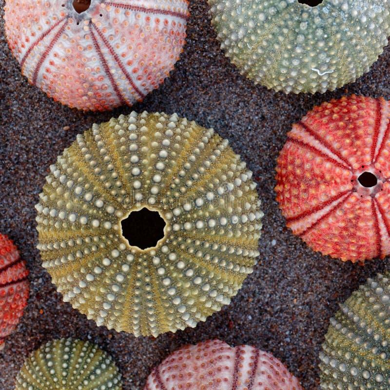 在湿沙滩的五颜六色的海顽童壳 库存图片