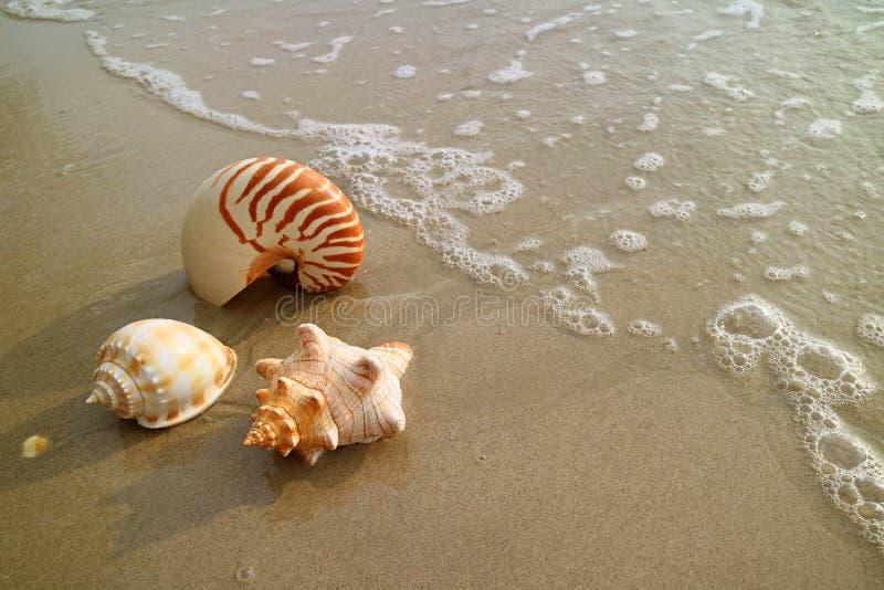 在湿沙滩的美好的自然海壳与回流,泰国 库存图片