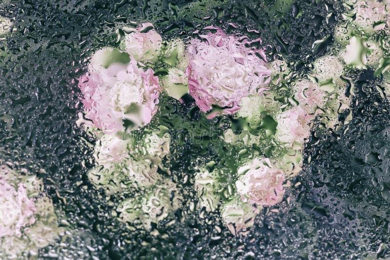 在湿窗口后的桃红色花与被弄脏的雨滴,滴下在玻璃的水,作为水彩 抽象春天 免版税库存图片