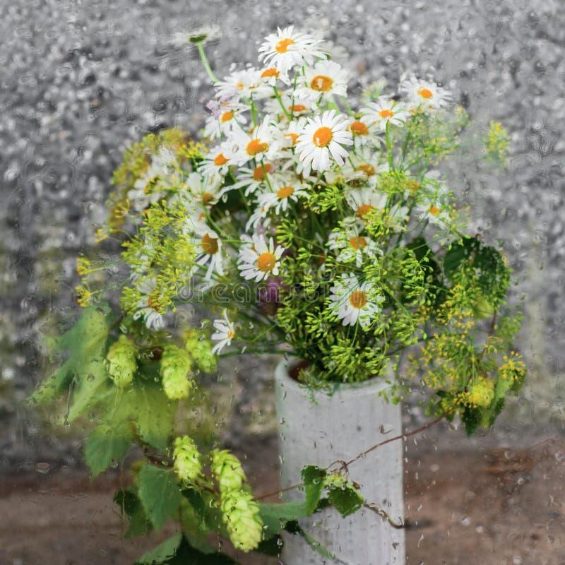 在满地露水的玻璃后的新鲜的年轻草甸花束 免版税库存照片
