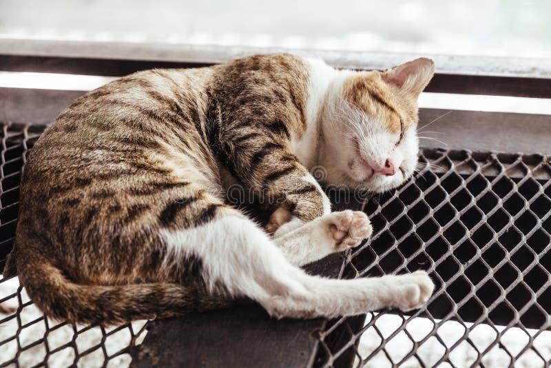 在滤网钢基底上的睡觉黑,棕色和白色毛皮猫有被弄脏的背景 免版税图库摄影