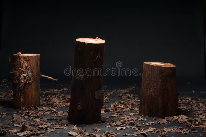 在演播室的树干 免版税库存照片