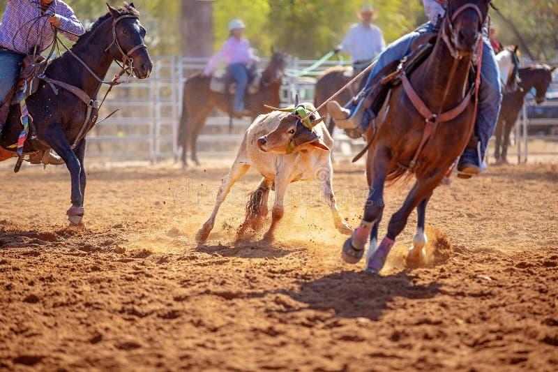 在澳大利亚圈地的小牛绕绳竞争 免版税库存照片