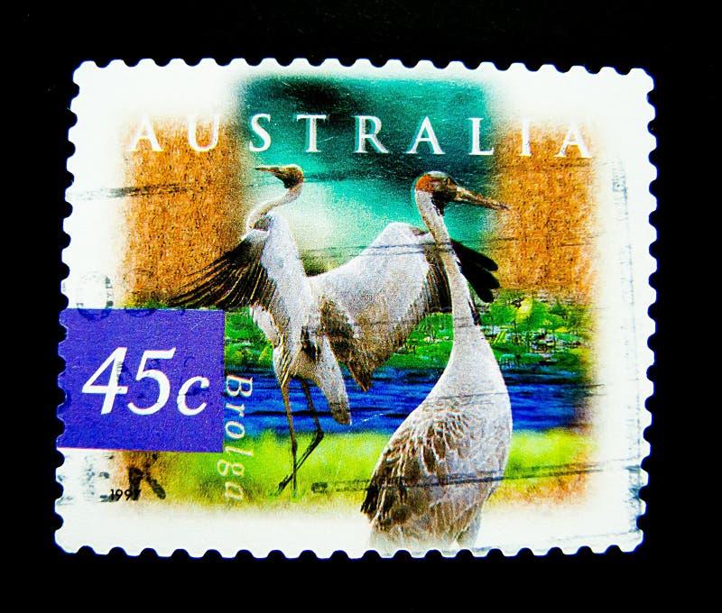 在澳大利亚打印的邮票显示brolga安提歌尼在价值的rubicunda鸟的图象在45分 库存图片