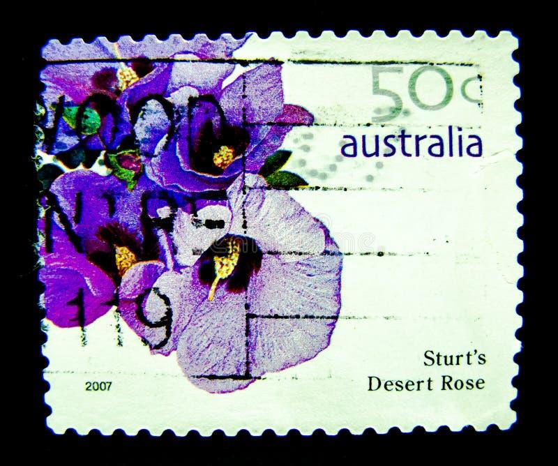 在澳大利亚打印的邮票显示sturt ` s沙漠玫瑰紫色花的图象在价值的在50分 库存图片