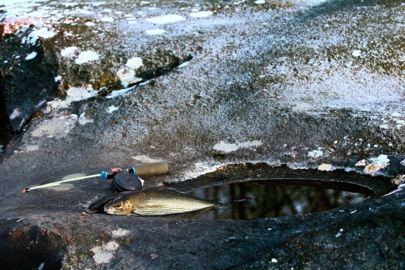 在瀑布和石头大锅的冬天渔有河鳟的 库存照片
