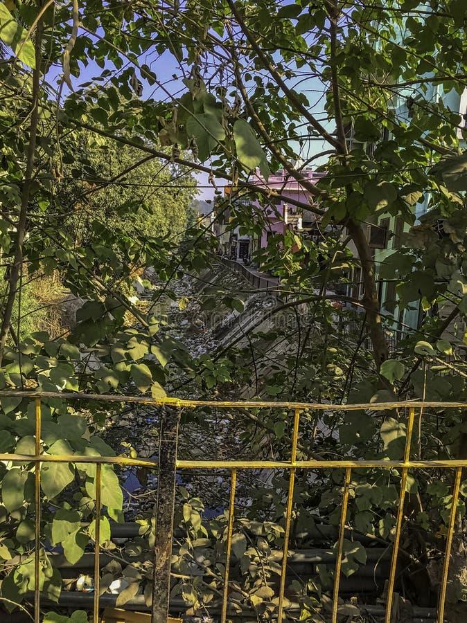 在灌木后的戈西河与浮动垃圾在拉姆纳加尔,印度 库存照片