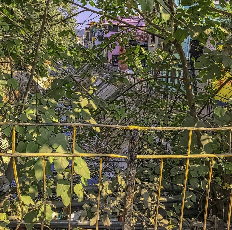 在灌木后的戈西河与浮动垃圾在拉姆纳加尔,印度 图库摄影