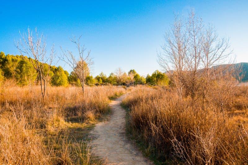 在灌木围拢的山中间的土路带领绿化树和山 库存照片