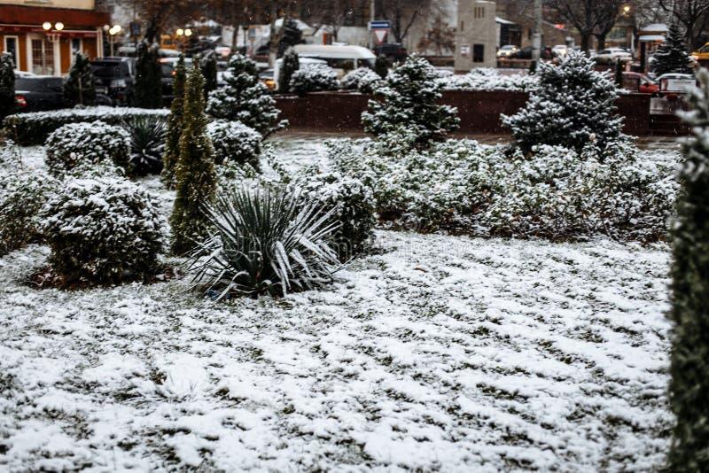 在灌木的雪在城市公园 免版税库存图片