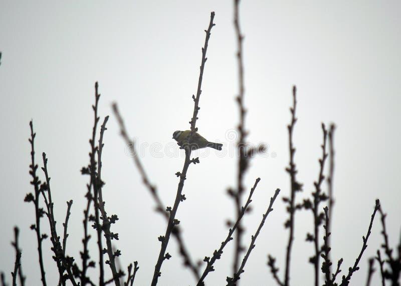 在灌木的鸟 剪影树 环境,环境 免版税库存图片