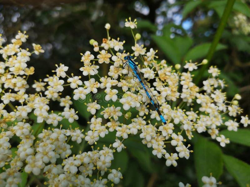 在灌木的龙飞行 免版税图库摄影
