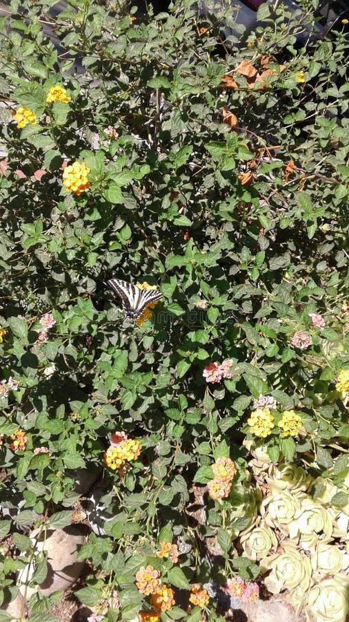 在灌木的蝴蝶 免版税库存照片