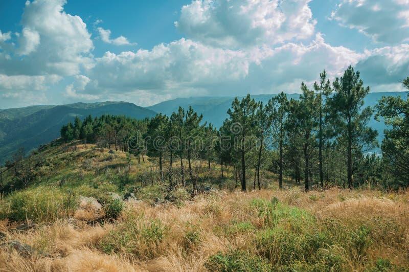 在灌木盖的多小山土坎顶部的树 库存图片