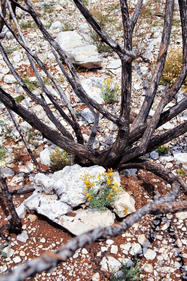 在火以后的死的树 库存照片