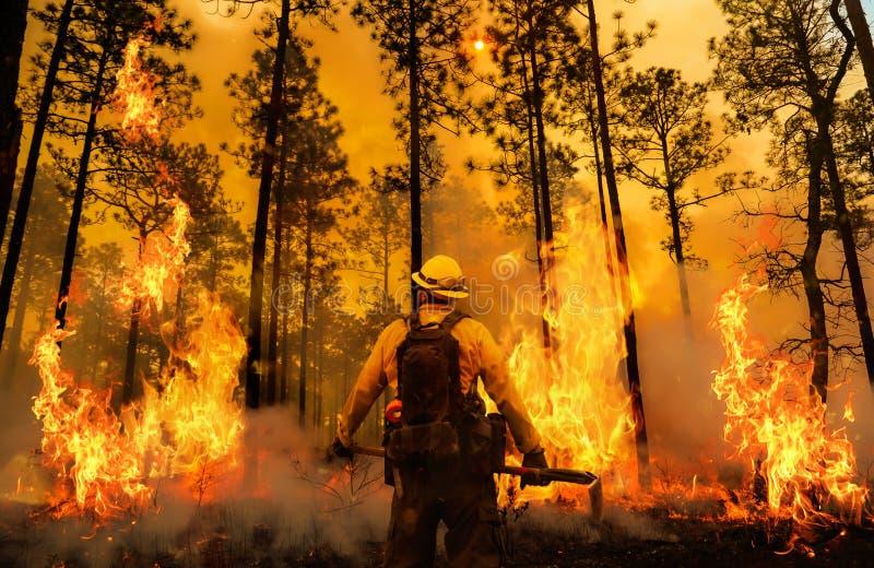 在火和烟之间的消防员 皇族释放例证