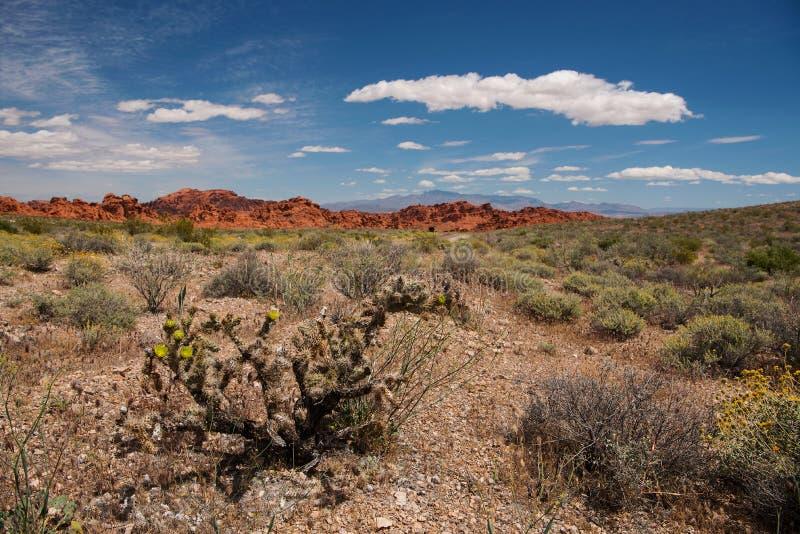 在火国家公园谷的仙人掌布什  库存图片