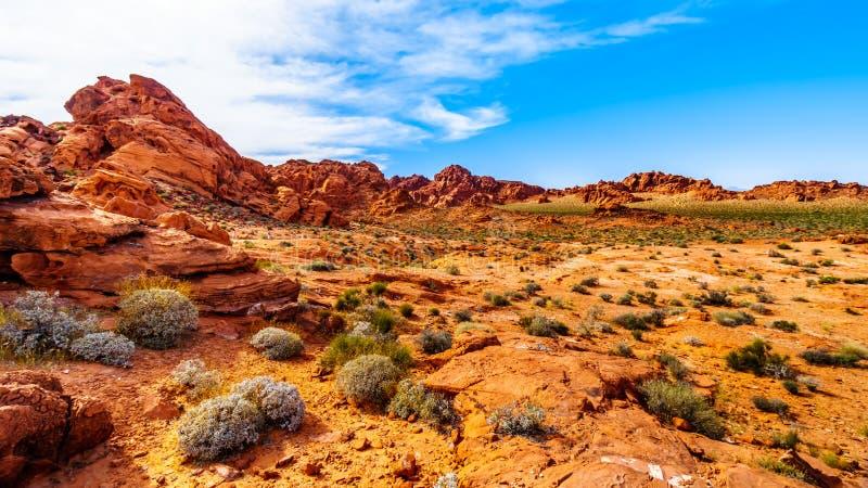 在火国家公园,内华达,美国谷的红色阿兹台克砂岩岩层  库存图片