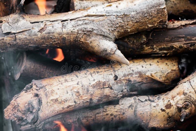 在火特写镜头的燃烧的木树 免版税库存图片