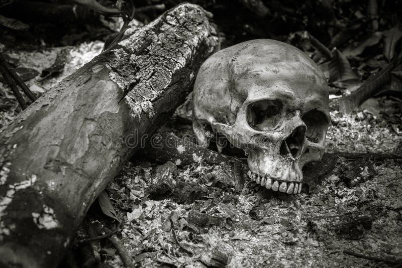在灰的头骨 图库摄影