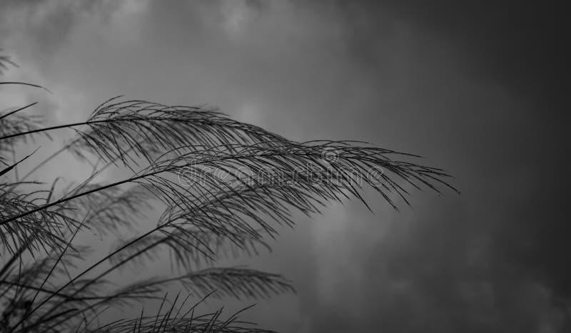 在灰色天空和云彩被弄脏的背景的草花  抽象背景冬天 哀伤和单独和偏僻情感 库存照片