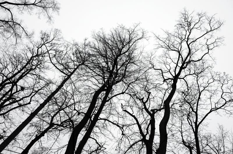 在灰色天空背景的不生叶的光秃的树 图库摄影