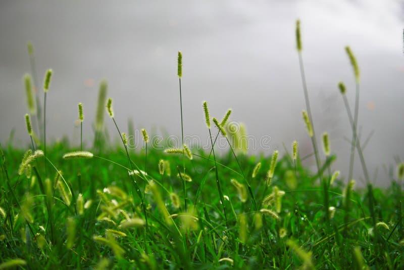 在灰色湖的花草 图库摄影