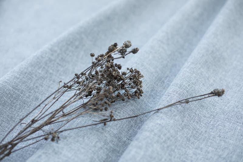 在灰色织品的干花 库存图片