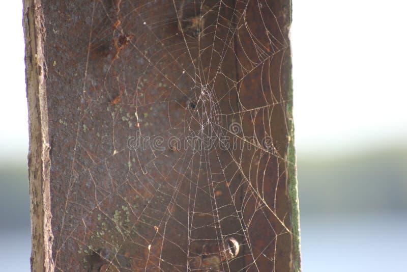 在灰色背景、房子和蜘蛛陷井上的一个网 在阳光下美好的螺纹闪烁网,生存 免版税库存照片