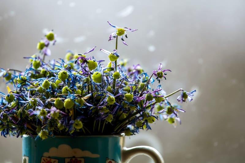 在灰色背景的凋枯的银莲花属 免版税库存图片