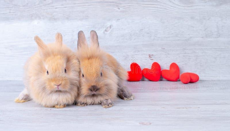 在灰色背景的夫妇小浅褐色的小兔在与微型心脏的华伦泰题材在他们后 免版税库存照片