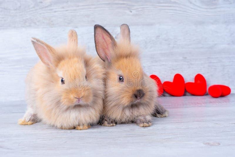 在灰色背景的夫妇小浅褐色的小兔在与微型心脏的华伦泰题材在他们后 图库摄影