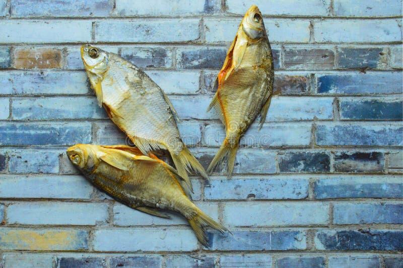 在灰色背景的干咸鱼vobla 免版税库存照片