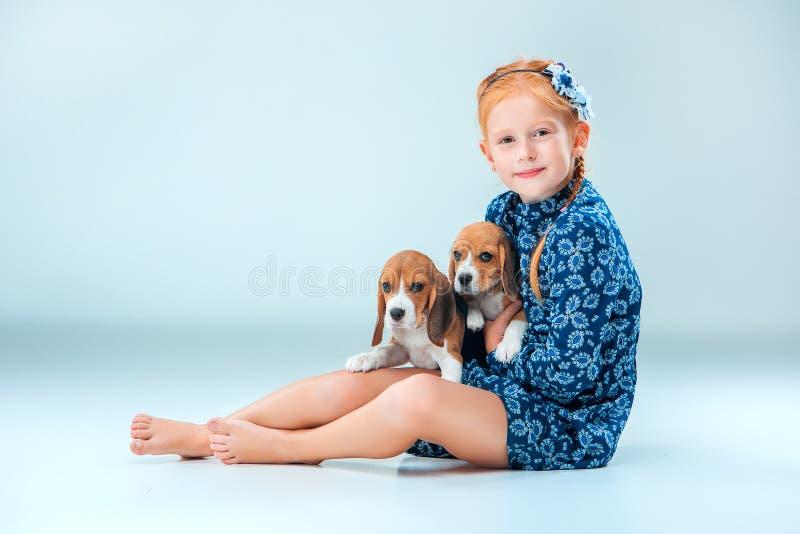 在灰色背景的愉快的女孩和两个小猎犬puppie 库存照片
