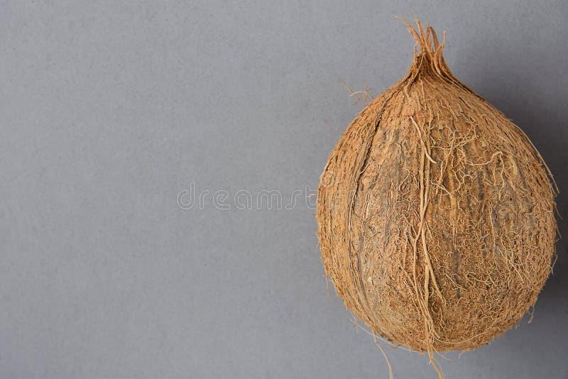 在灰色背景的整个成熟椰子 旁边位置 海报飞行物的模板 热带假期健康温泉 海滩党 免版税库存图片