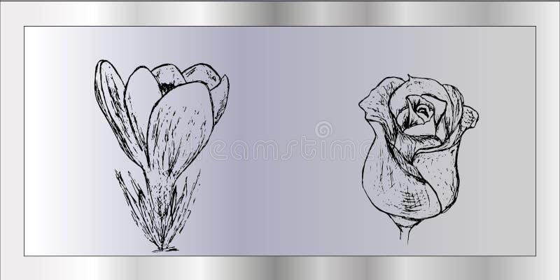 在灰色背景的番红花和杂种玫瑰色handrawn 免版税库存照片