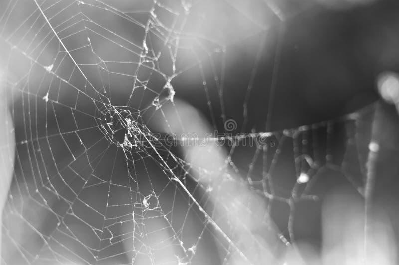 在灰色背景的蜘蛛网 免版税库存图片