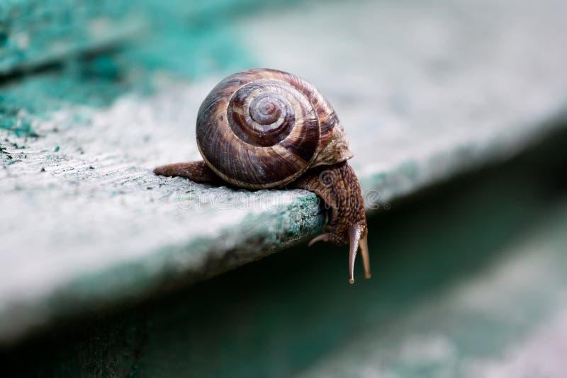 在灰色绿的背景的蜗牛 免版税库存图片