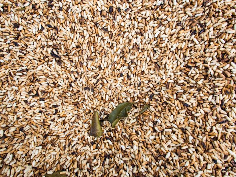 在炸锅的米种子 库存图片