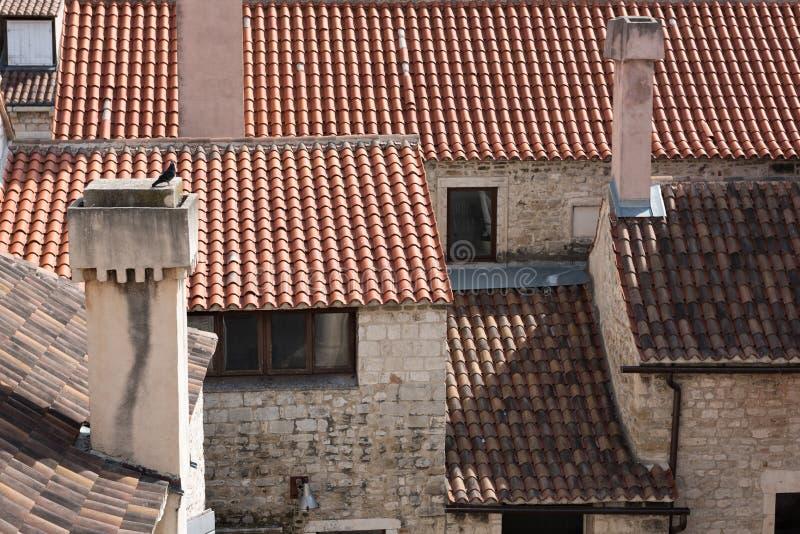 在烟囱的鸽子在城市的红色屋顶上 免版税图库摄影