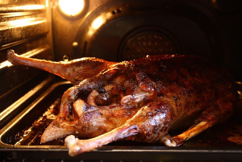 在烤箱的鹅 免版税库存图片