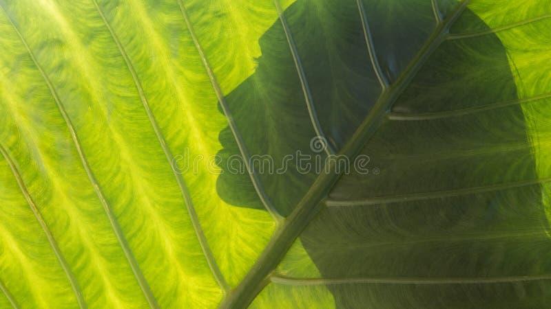 在热带叶子背景的美丽的妇女剪影 健康 免版税库存图片