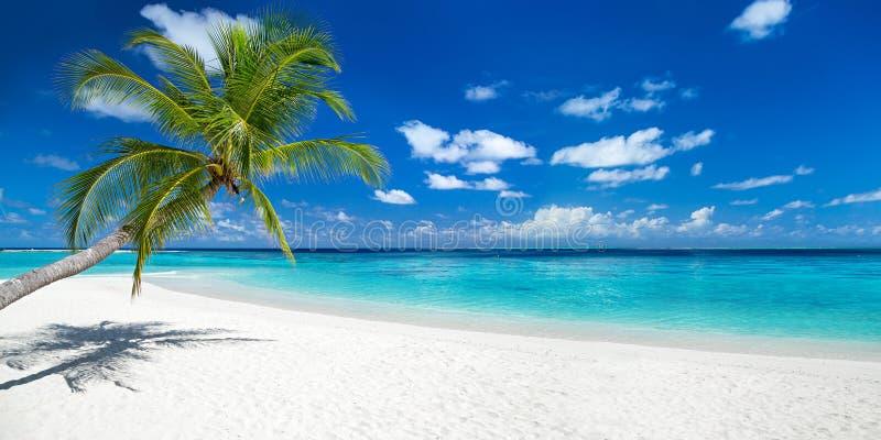 在热带天堂全景海滩的椰子树 库存图片